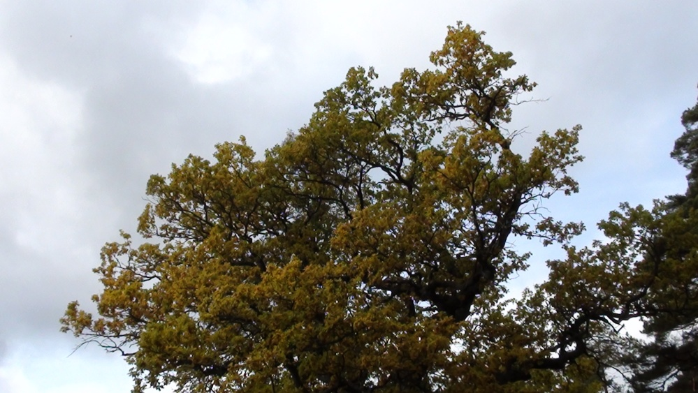 6th of October In Mariefred (An Autumn Day) (2/6)