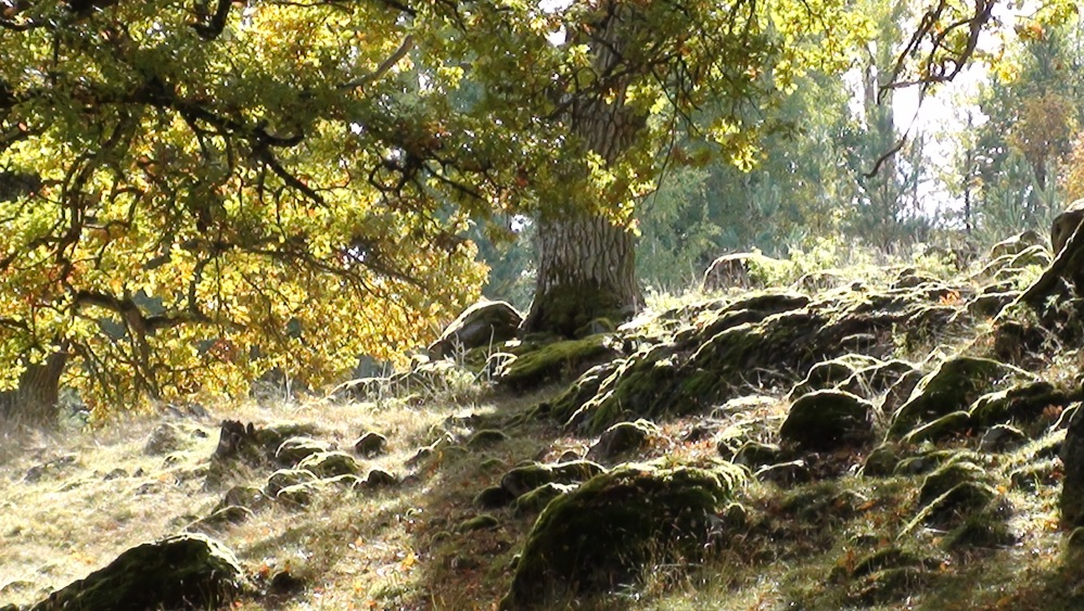 6th of October In Mariefred (An Autumn Day) (5/6)